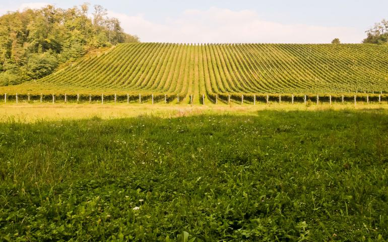 Ghemme Vineyard